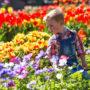 tulip_feature